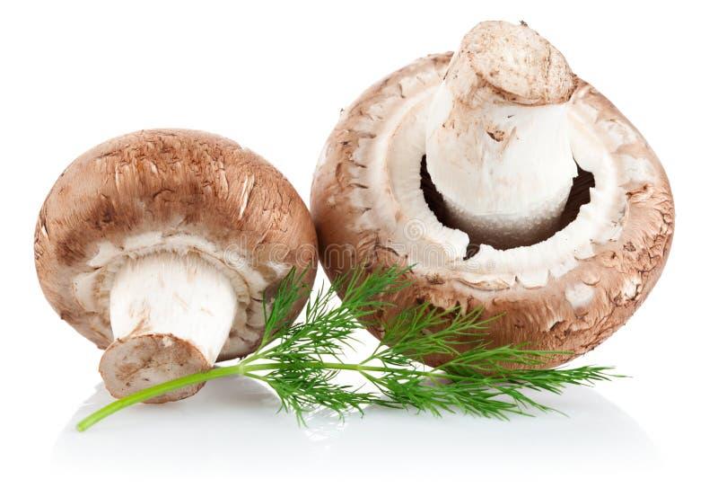 Fresh mushroom champignon with twig dill stock photo