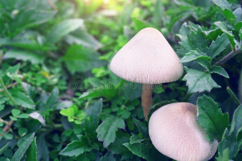 Fresh mushroom. Mushroom growing in the rain forest royalty free stock images