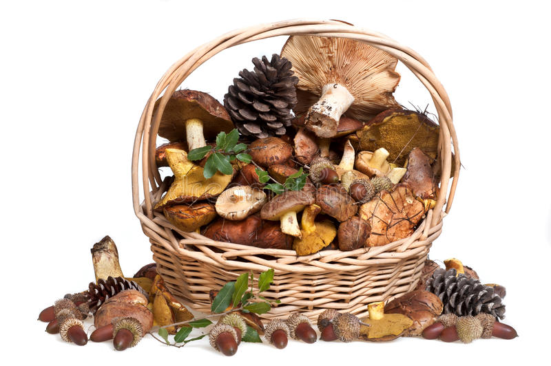 Fresh mushrooms in basket. On white background stock photo