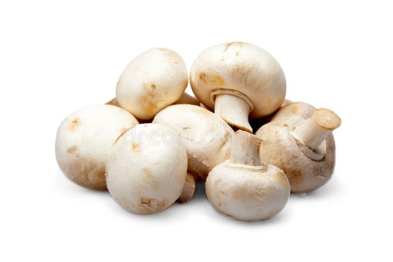 Fresh mushrooms champignons. Isolated on white royalty free stock photos