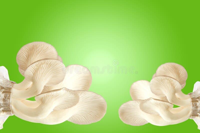 Fresh mushrooms on green stock image
