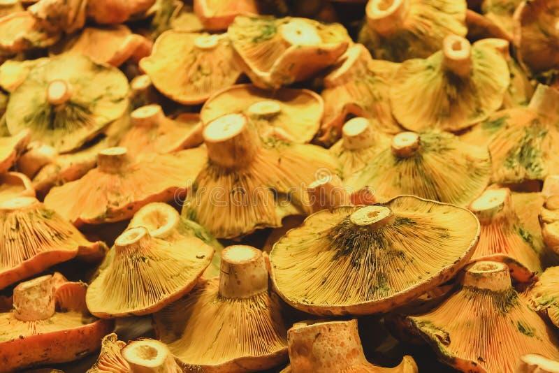 Fresh mushrooms, market in Barcelona. stock image