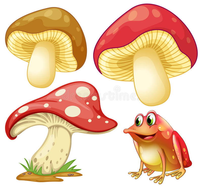 Fresh mushrooms and red frog vector illustration