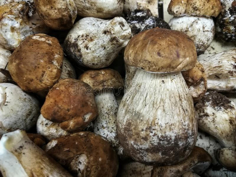 Fresh collected mushroom royalty free stock photography