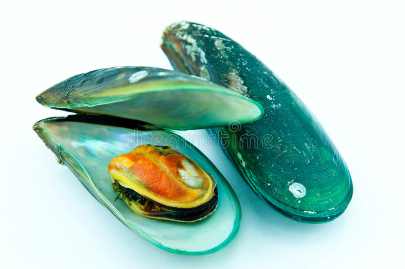 Fresh mussel. stock images