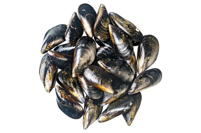 Fresh mussels isolated stock image
