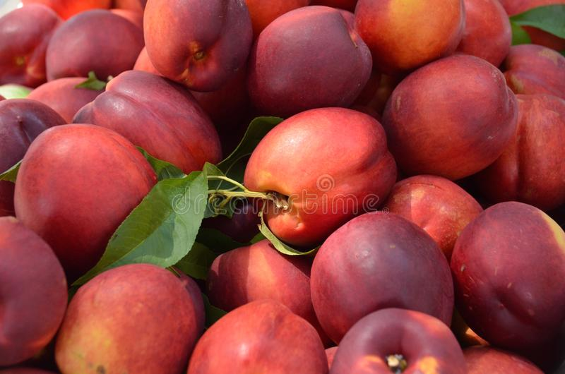 Fresh Nectarines. Fresh picked nectarines for sale in the outdoor farm market stock photo