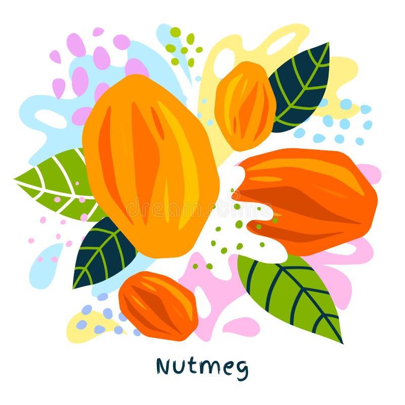 Fresh nutmeg juice splash organic food condiment spice splatter. Spicy herbs nuts. Abstract colorful art splatter splash background. Vector hand drawn vector illustration