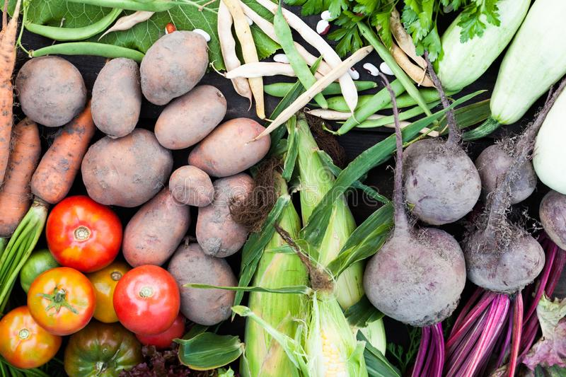 Fresh nutrient organic vegetables background. Sustainable farming agriculture  market. Fresh nutrient organic vegetables background. Sustainable farming stock photo