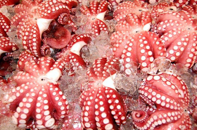 Fresh Octopus stock photography