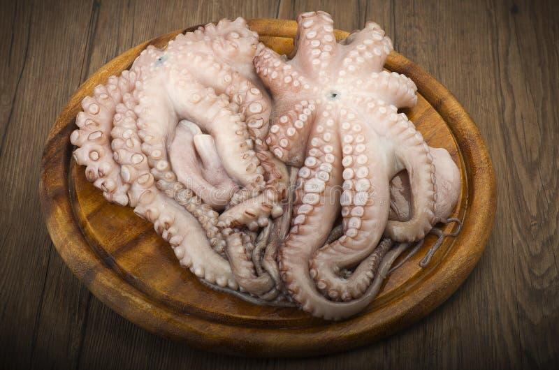 Fresh octopus stock photos