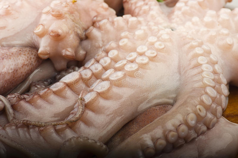 Fresh octopus stock photo