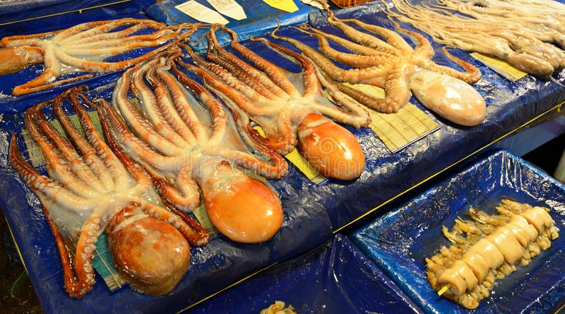 Fresh Octopus stock images