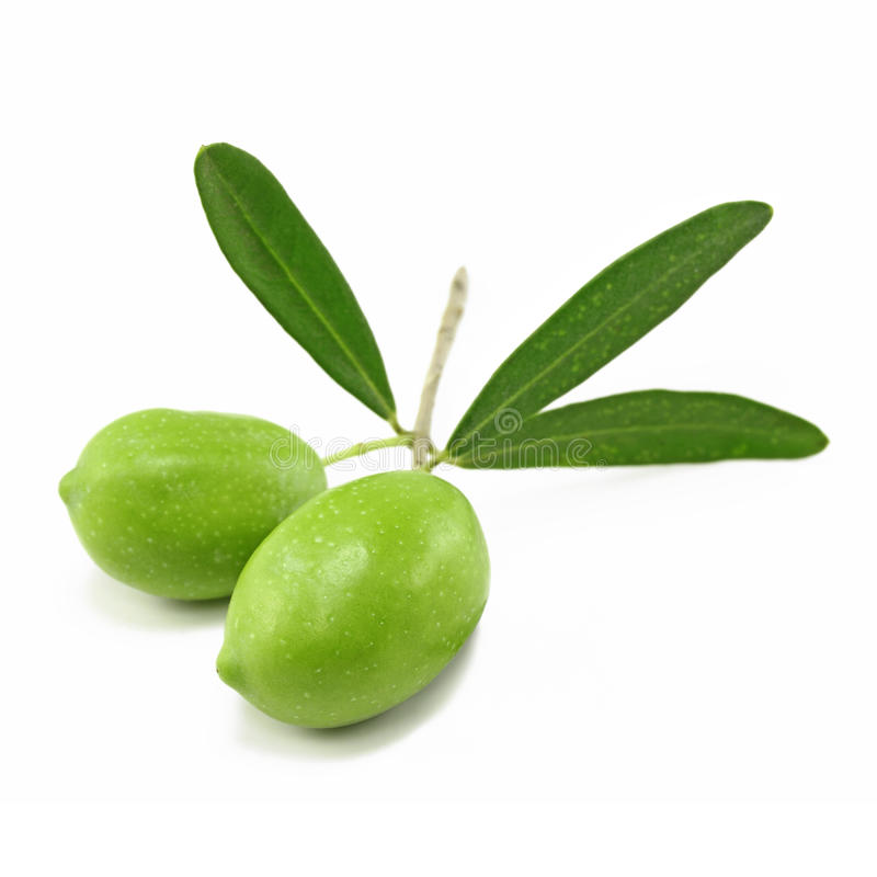 Free Fresh Olive Branch Royalty Free Stock Image - 39736476