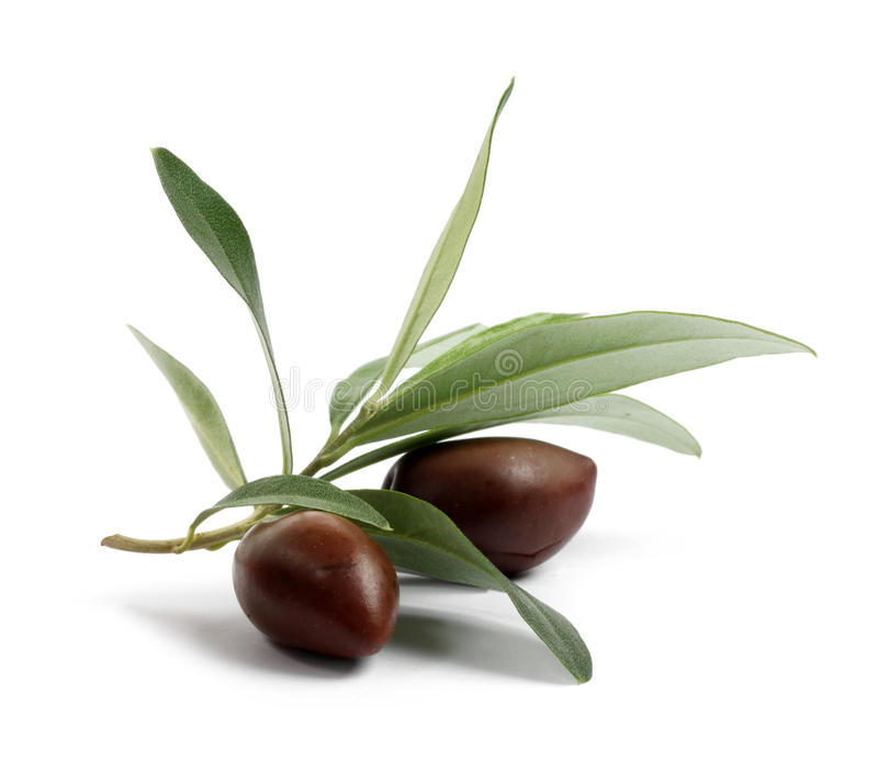 Download Fresh Olive Tree Branch With Olives Stock Image - Image: 22899805