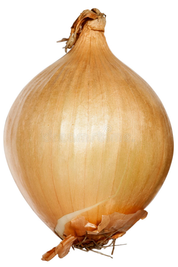 Download Fresh Onion Stock Image - Image: 11279061