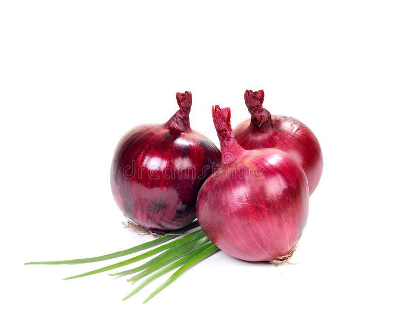 Download Fresh Onion Stock Photos - Image: 16646813