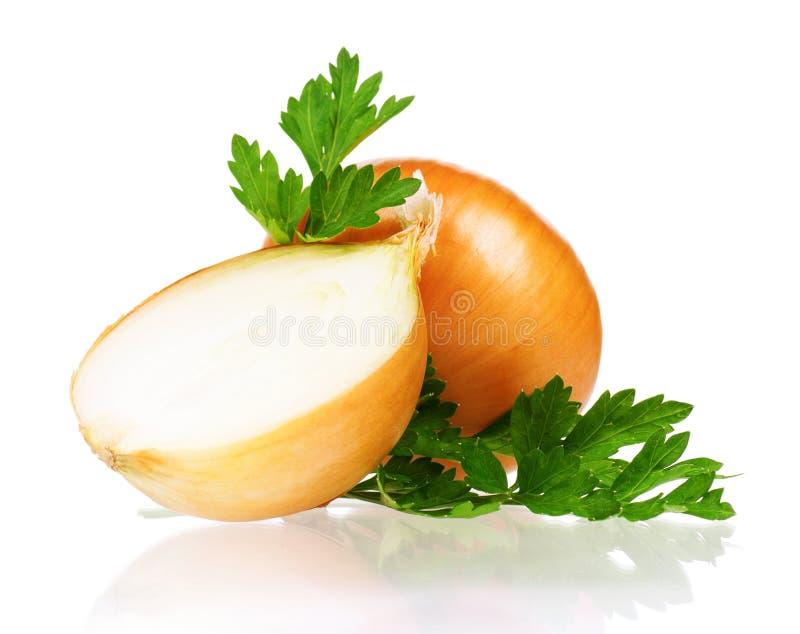 Fresh onion stock photos