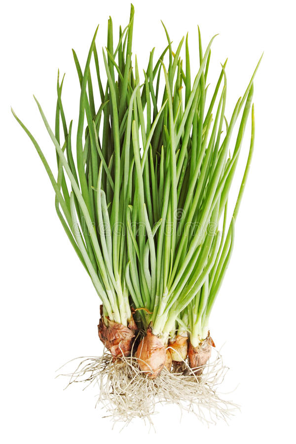 Free Fresh Onions Royalty Free Stock Images - 30486349