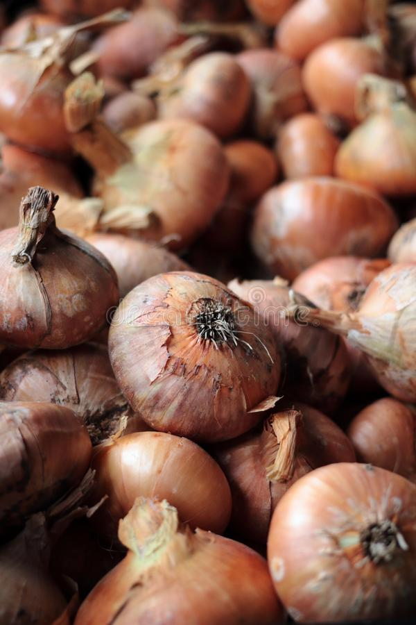 Fresh onions at the farmers market. stock images