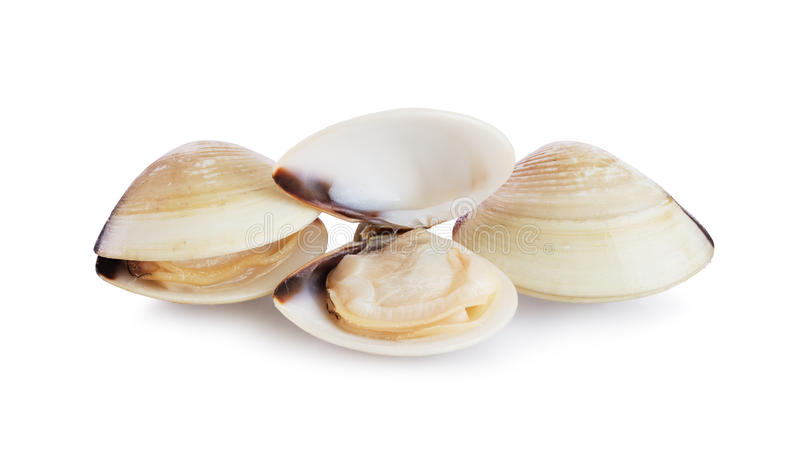 Fresh opened and closed clams royalty free stock images