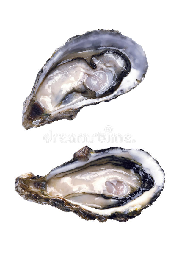 Fresh opened oyster royalty free stock images