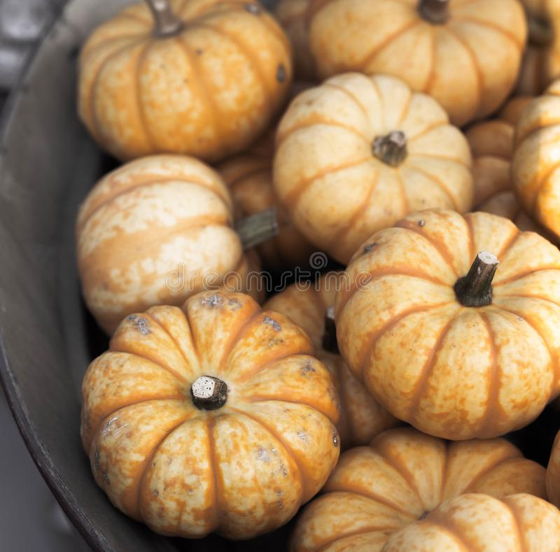 Fresh orange decorative autumn pumpkins background stock images