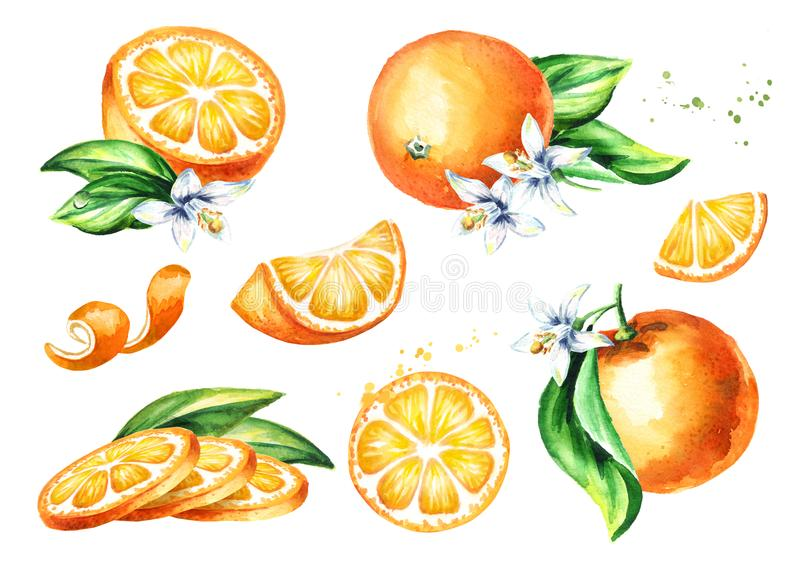 Fresh Orange fruit compositions collection. Watercolor hand drawn illustration, isolated on white background stock illustration
