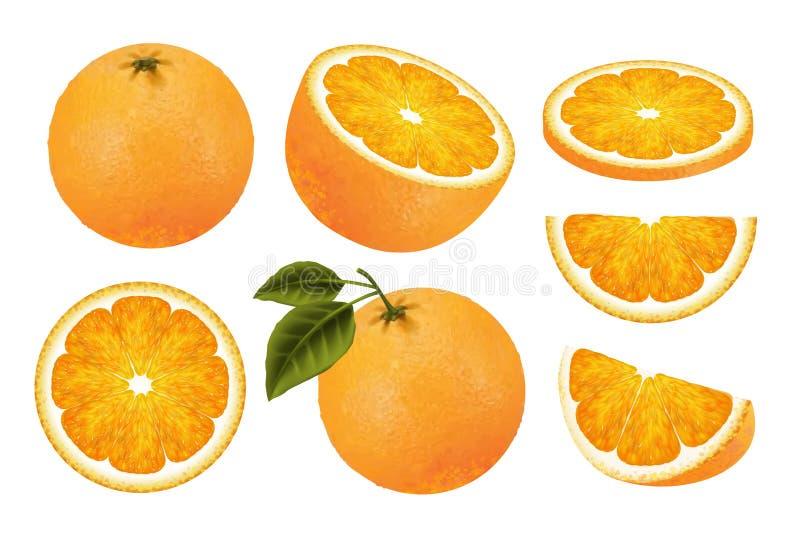 Fresh orange fruit set. Juicy orange isolated on white background in 3d illustration vector illustration