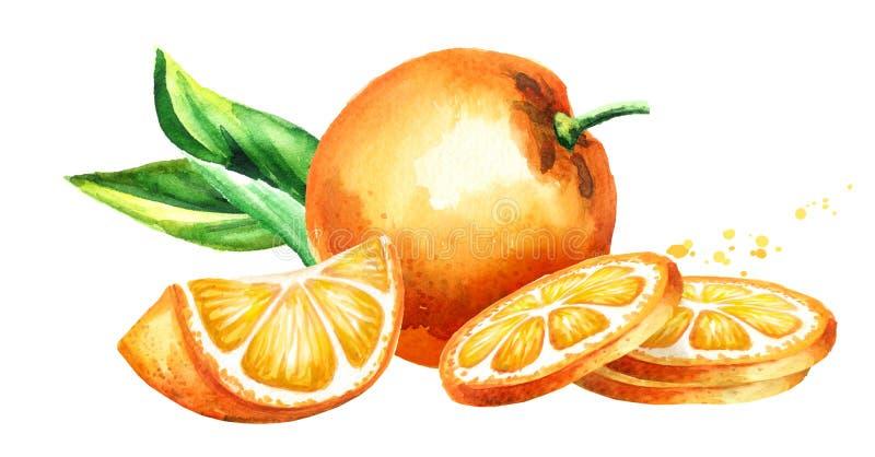 Fresh Orange fruits composition. Watercolor hand drawn illustration, on white background. Fresh Orange fruits composition. Watercolor hand drawn illustration stock illustration