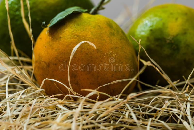 Fresh Orange fruits with grass. Fresh Organic Orange fruits with driied grasses royalty free stock photos