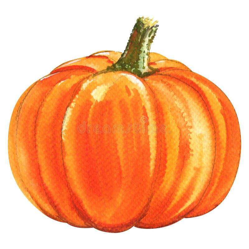 Free Fresh Orange Pumpkin Isolated, Watercolor Illustration On White Royalty Free Stock Image - 79156276