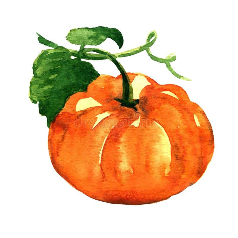 Fresh orange pumpkin isolated on white background. Fresh orange pumpkin isolated, watercolor painting on white background stock illustration