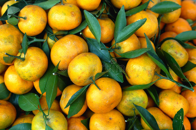 Download Fresh Oranges Royalty Free Stock Images - Image: 13085659