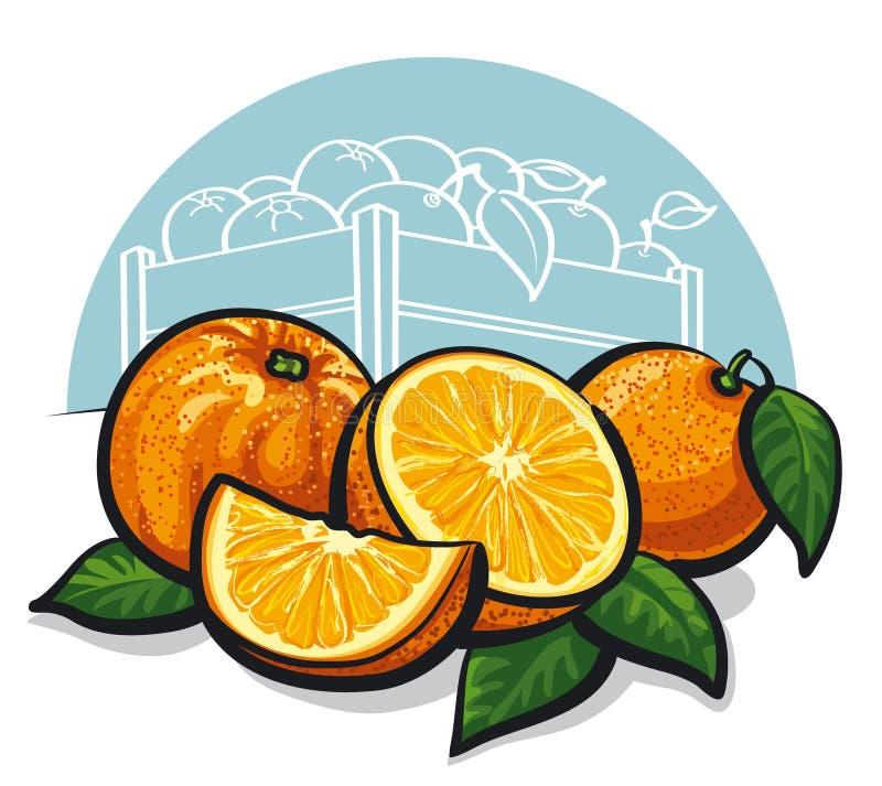 Fresh oranges. Group of fresh oranges with leaves royalty free illustration