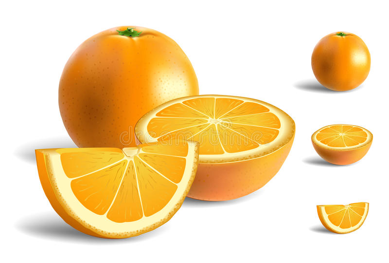 Fresh Oranges. Isolated on white background, one is halved and one is sliced vector illustration
