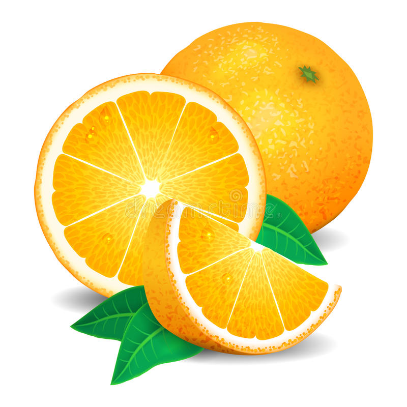 Fresh oranges fruit, pieces of orange. Realistic oranges, vector. Illustration on white background vector illustration