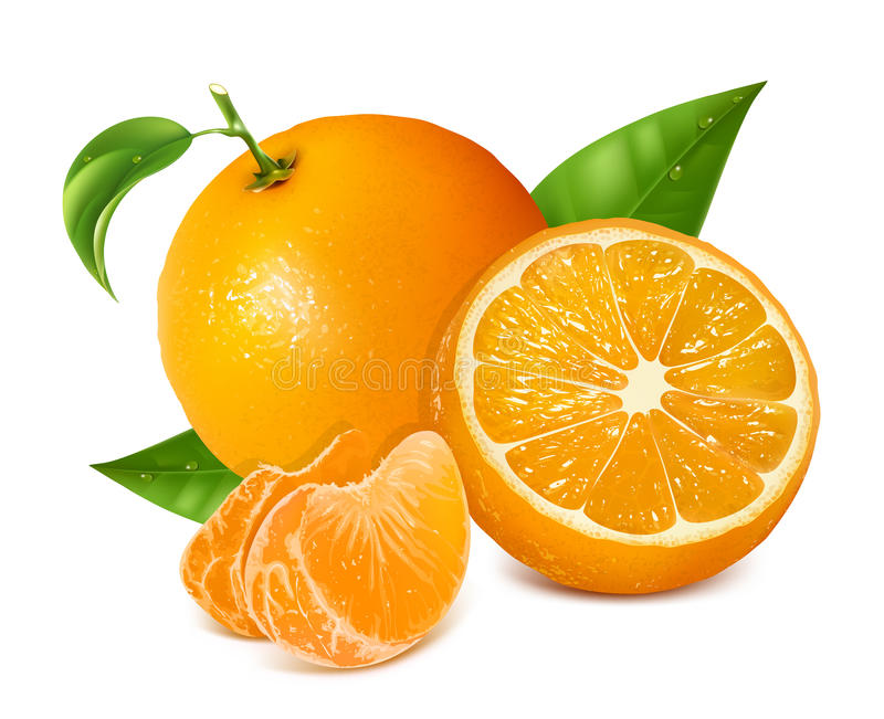 Fresh oranges fruits with green leaves and slices vector illustration