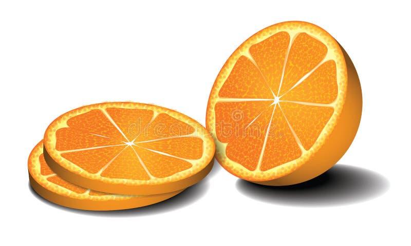 Fresh oranges fruits. Vector illustration. Fresh oranges fruits isolated on white background stock illustration