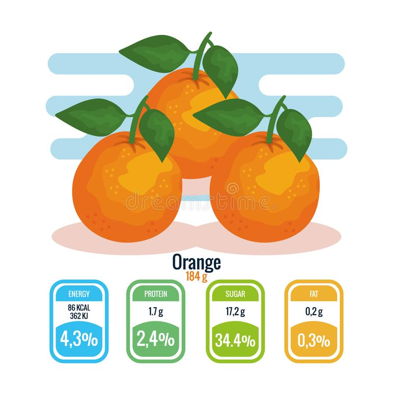Fresh oranges with nutrition facts. Vector illustration design royalty free illustration