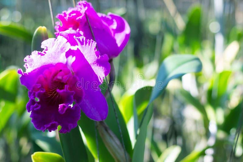 Fresh orchid