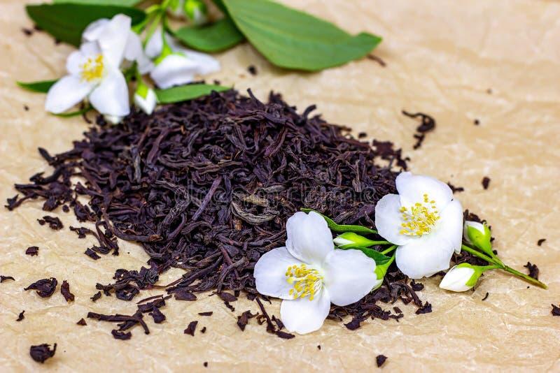 Fresh organic aromatic dry black tea leaves heap with white jasmine flowers on light background. royalty free stock photo