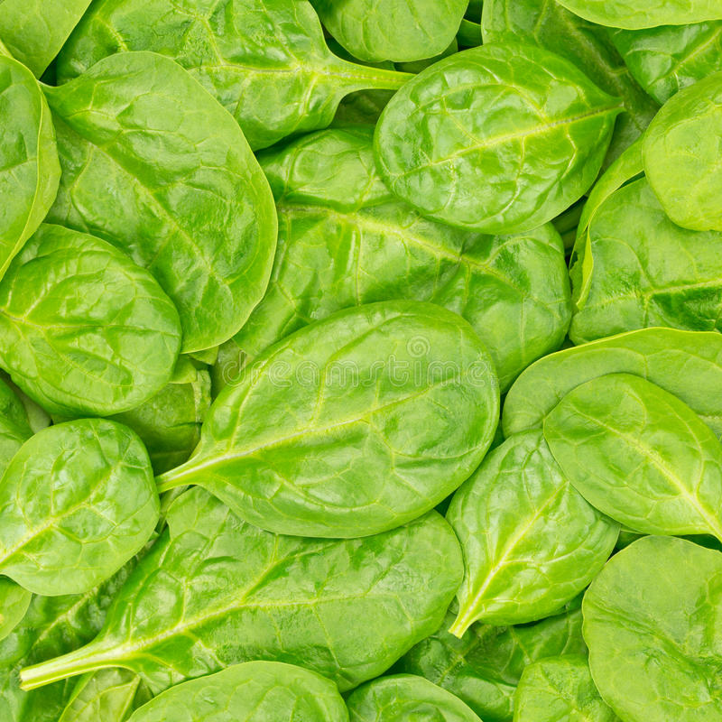 Fresh Organic Baby Spinach background or texture. Raw food. royalty free stock photos