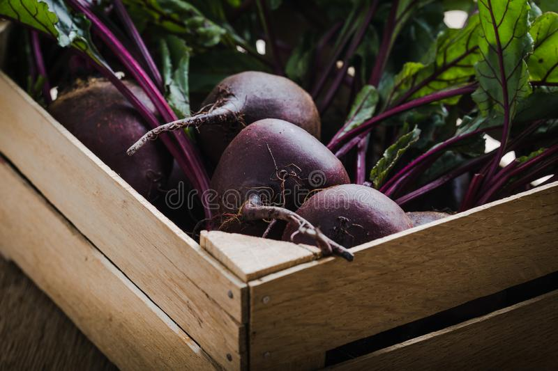Fresh organic beetroots, plant based food. Fresh organic homegrown beetroots  in wooden crate, vegan  plant based food, close up, selective focus royalty free stock images