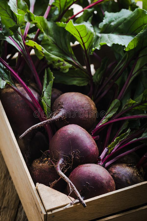 Fresh organic beetroots, plant based food. Fresh organic homegrown beetroots  in wooden crate, vegan  plant based food, close up, selective focus royalty free stock image