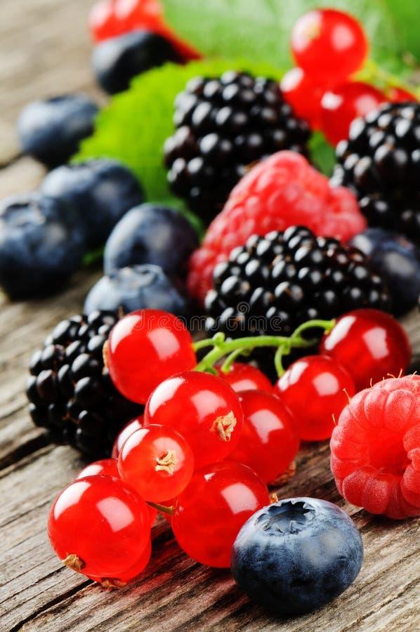 Fresh organic berries royalty free stock photography