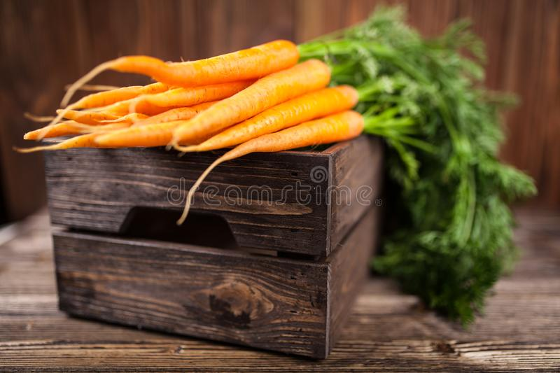 Fresh organic carrot royalty free stock images
