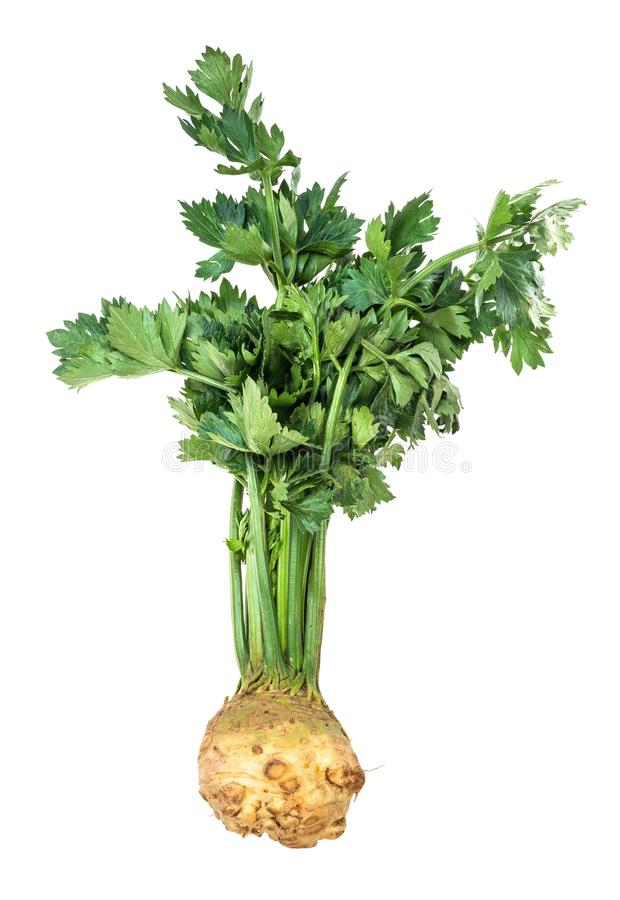 Fresh celeriac (celery root) with greens cutout. Fresh organic celeriac (celery root) with greens cutout on white background royalty free stock images