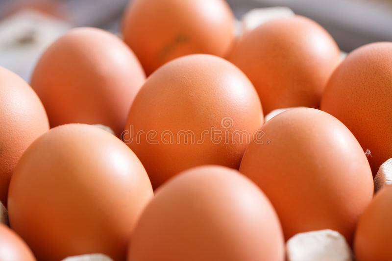 Fresh and organic chicken eggs packed in holders royalty free stock photo