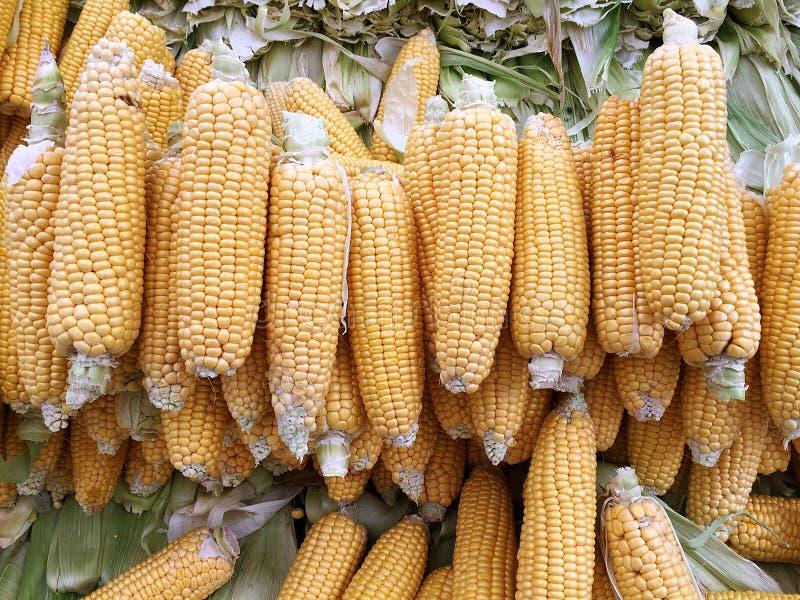 Fresh organic corns stock images